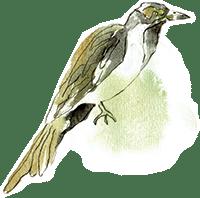 Bird W Splatter