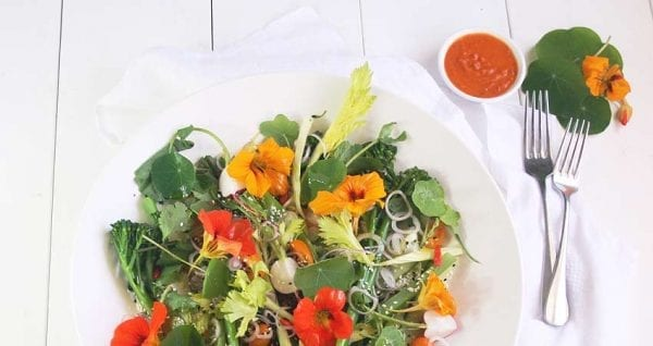 Blog Nasturtium And Hot Smoked Salmon Salad01