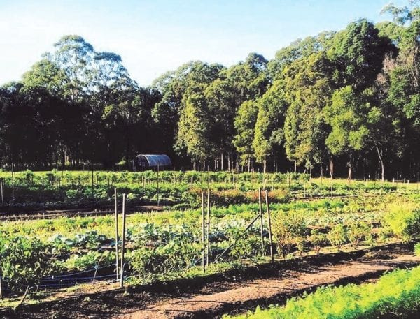 Maravista Farm (1)